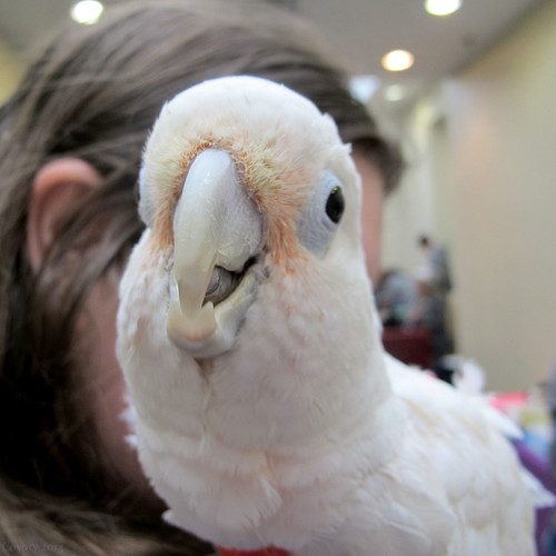 White parrot by Coyoty