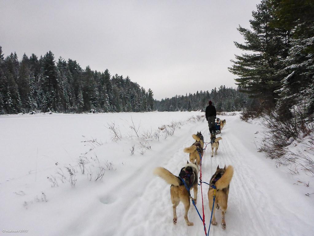Dogsledding Canada