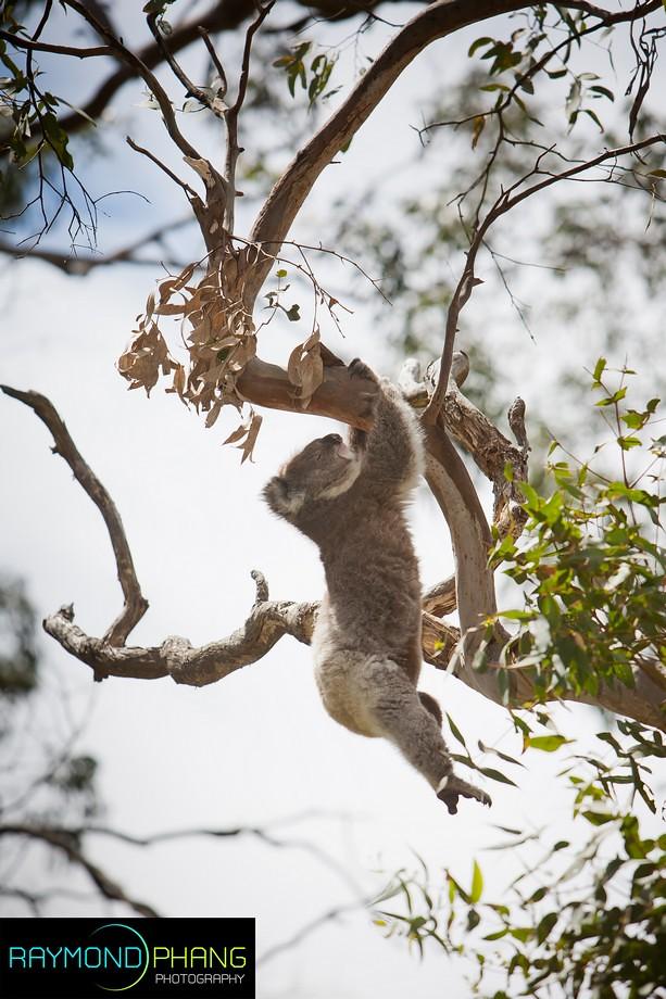 RaymondPhang-Australia