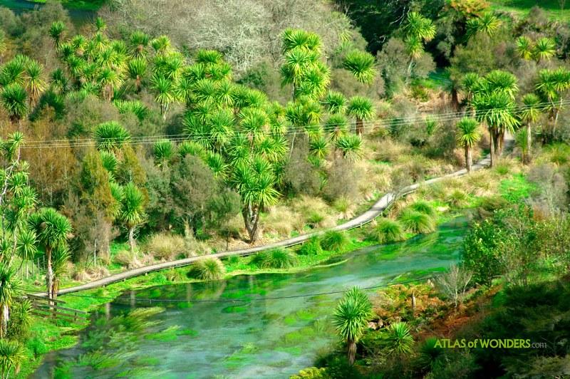 ослепительные цвета река