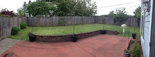 The Back Yard