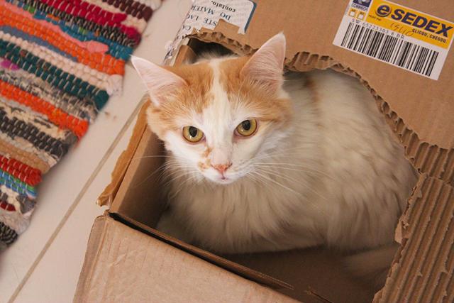 marcela-cat
