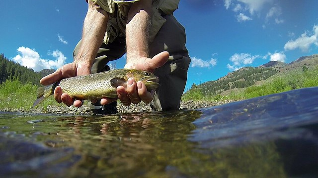 Allens Trout final edit