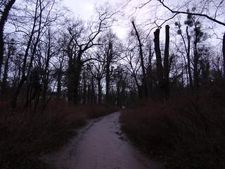 Dresden Finstre Dämonen im Wald
