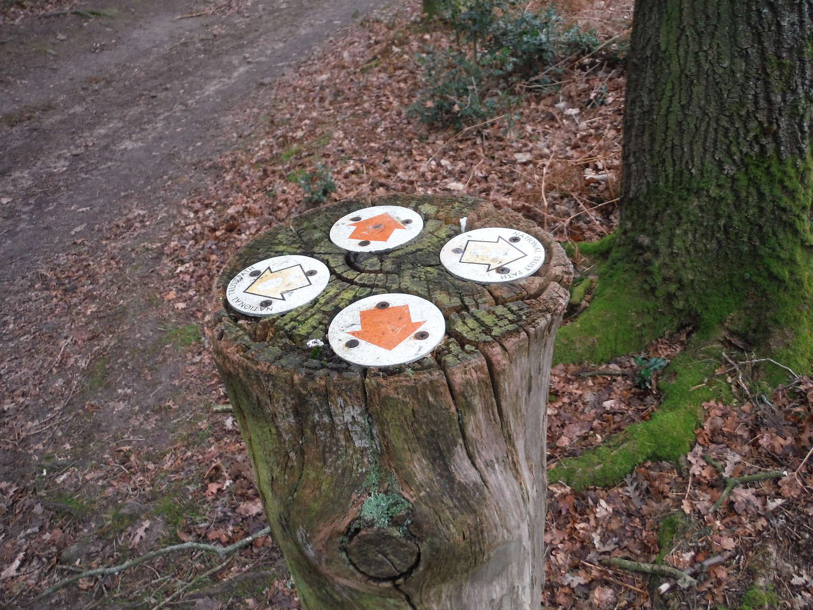Highcomb Bottom, Markers on Tree Stump SWC Walk 144 Haslemere to Farnham