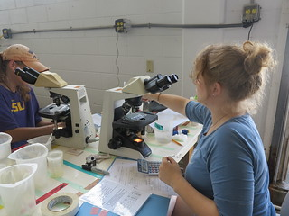 photo of people using microscopes in a laboratory setting