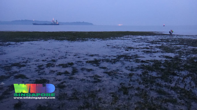Seagrass meadows at changi flickr photo sharing for Seagrass landscaping