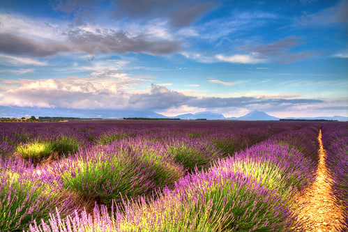 summer sky france color nature beautiful beauty field lines clouds french landscape evening colorful purple natural plateau vibrant harvest violet lavender vivid growth rows crop provence hdr valensole