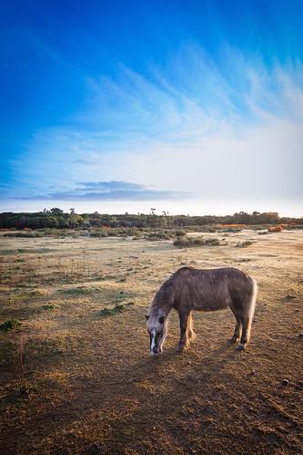 newzealand field sunrise pony westcoast haast