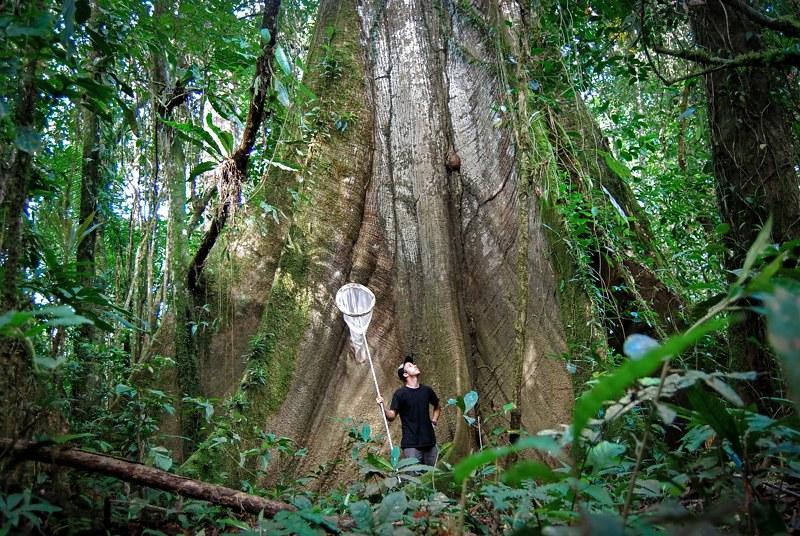 Amazon Ecuador