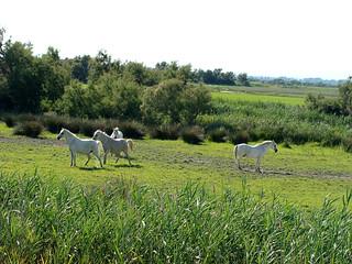 211 paarden