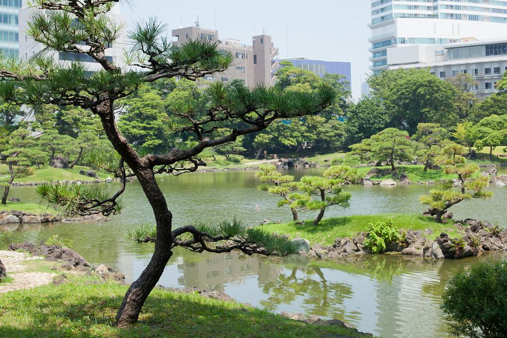 Kyu Shiba Rikyu, une oasis en plein Tokyo