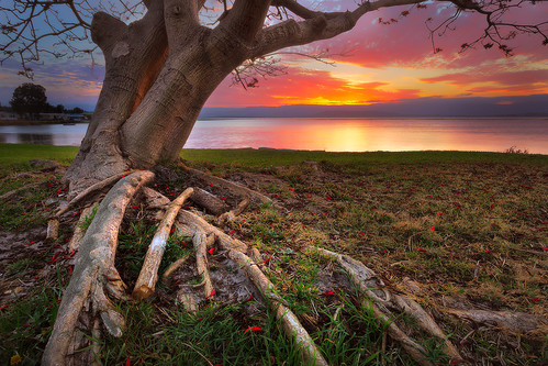 longexposure sunset red lake tree water leaves sunrise branches roots australia nsw newsouthwales southcoast illawarra lakeillawarra