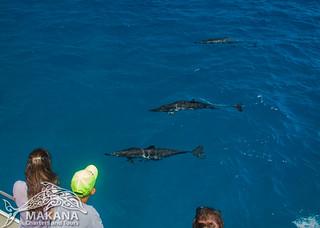 Spinner Dolphins on Kauais Napali Coast