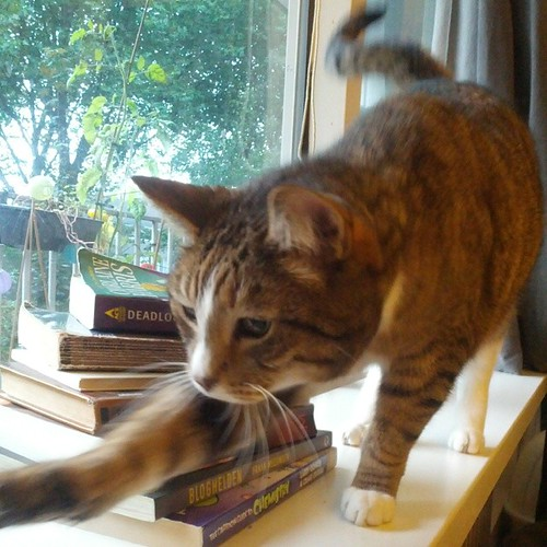 a pile of books obscured by a cat in front, trying to catch the camera