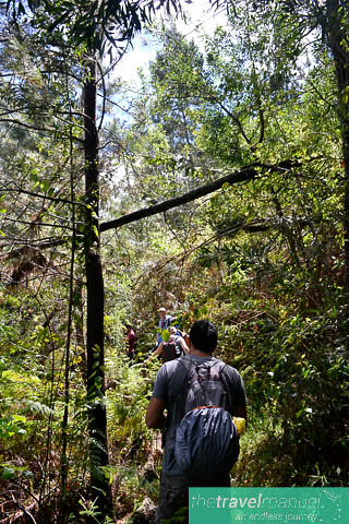 Enchanted Hogsback Forest