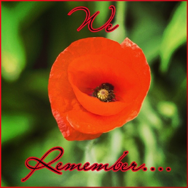 We Remember... #poppies #war #peace #weremember #remembrancepoppy #ww1 #ww2 #history
