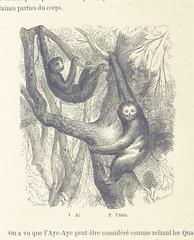 Image taken from page 422 of 'Le Désert et le Monde Sauvage ... Illustrations par Yan' D'argent, etc'