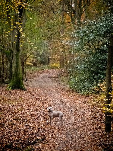 Uschi in Ecclesall Woods