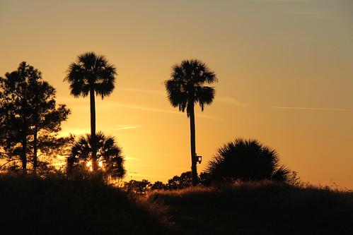 florida フロリダ floride unitedstates usa travel tree plants leesburg goldenhour light us eo