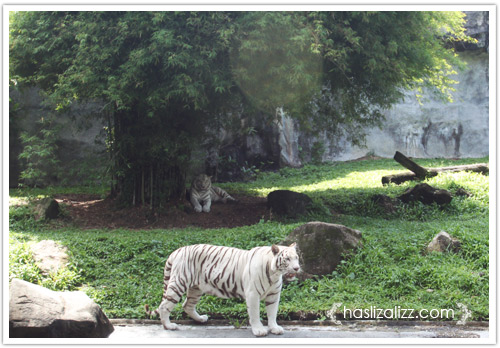 11711723533 71890845eb o BERCUTI DI HATYAI THAILAND PART 6   songkhla Zoo