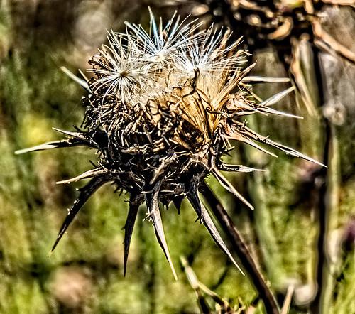 plant macro 2 by joeeisner