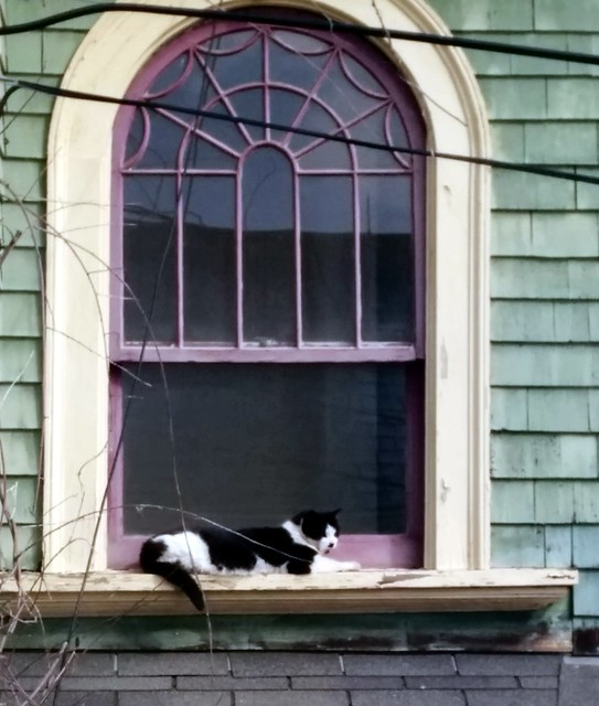 Cat on Window Ledge