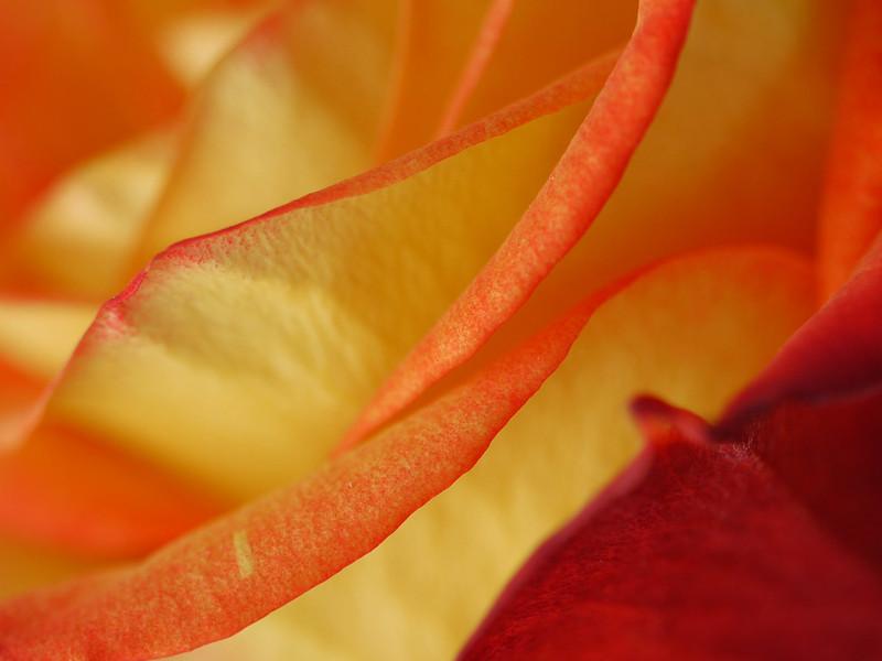 Petals 4