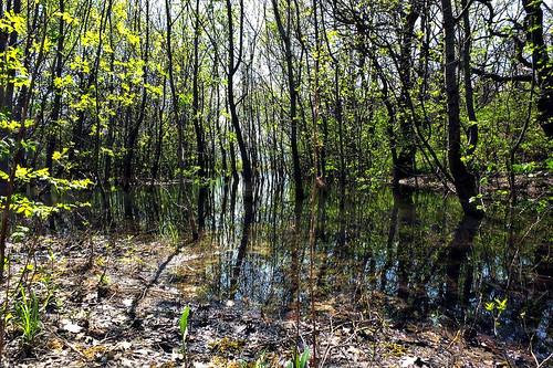 eau reflet commune thegimp arbre vie étang drôme traitement rhônealpes saoû fujixs1