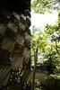 Photo:20130531 Yokiso 1 By BONGURI