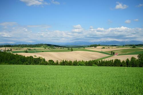 sky cloud field nikon df hokkaido hill jp 北海道 日本 雲 biei 空 畑 丘 美瑛町 小麦 上川郡 kamikawadistrict afsnikkor2485mmf3545gedvr