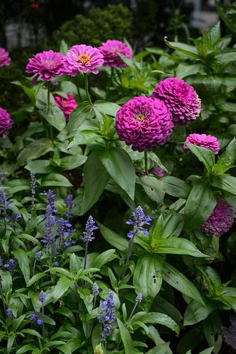 FilipWolak-LSBID-Gardens-8324