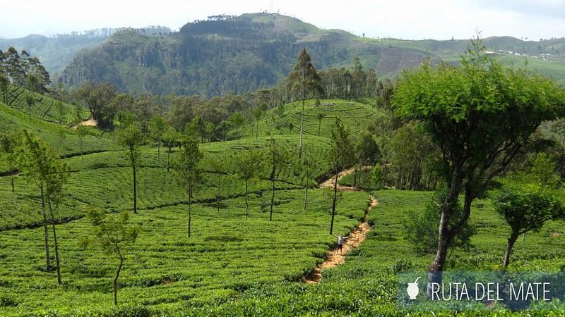 Haputale Sri Lanka (13)