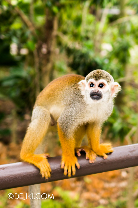 River Safari - Squirrel Monkey 7