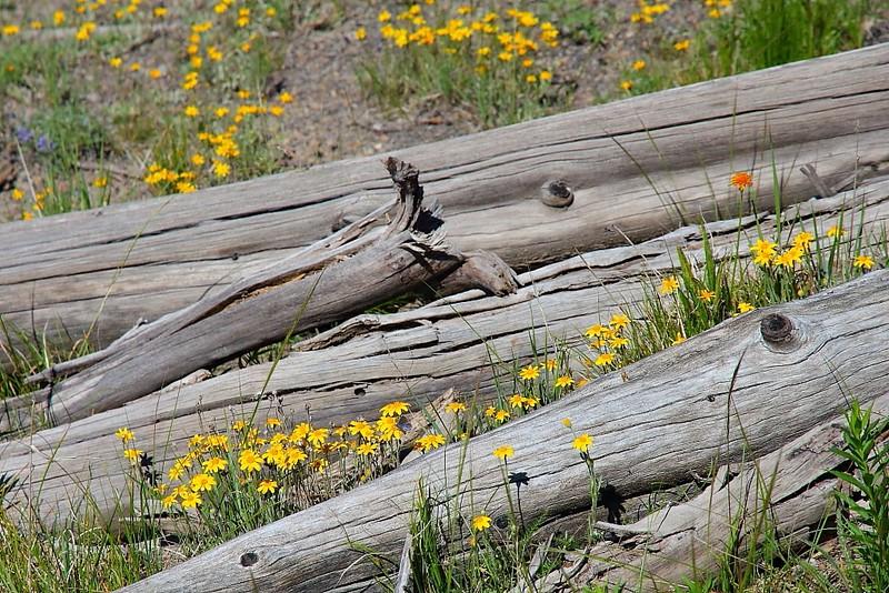IMG_3065 Ranger-Led Hike: Mystic Falls