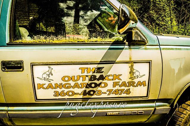 "The Outback Kangaroo Farm"""