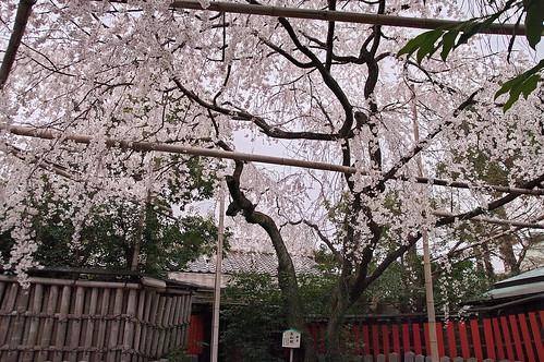 【写真】2013 桜 : 車折神社/2019-09-15/IMGP8796