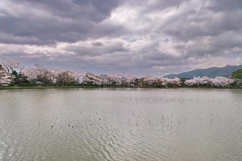 【写真】2013 桜 : 大覚寺/2020-09-15/IMGP9425