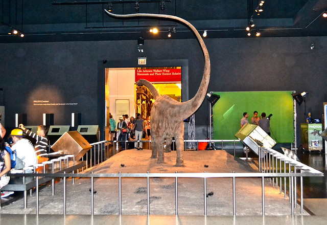 dinosaur exhibit at museum of natural history