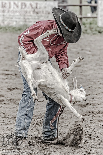 Gooseberry Lake : 4-H Rodeo 2013 : Heads or Tails