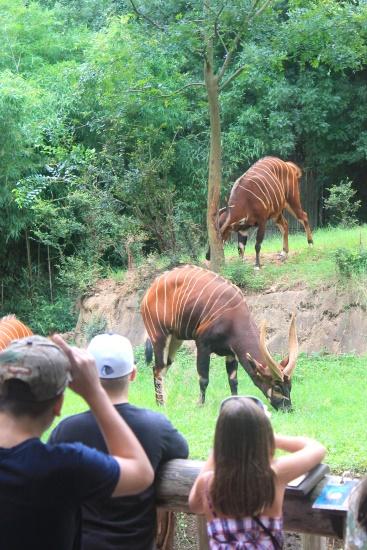 Atlanta Zoo '13, 4