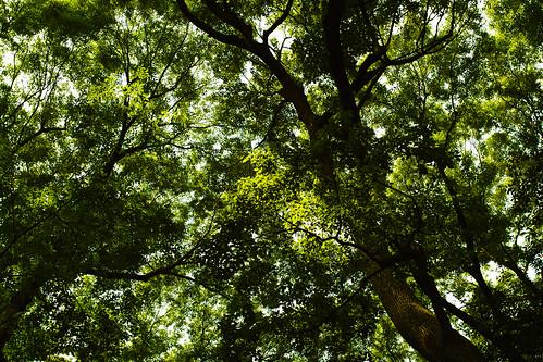 明治神宮の森2 by leicadaisuki