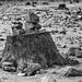 L'Ospedale (Corse du Sud) - Life on Mars ©Philippe Clabots