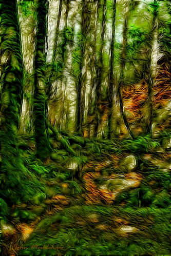 trees ireland forest canon woodland waterfall countykerry torc 600d fractalius blinkagain