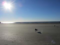 Sea gulls @ Hilton Head