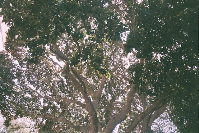Árbol, ramas, lo mío