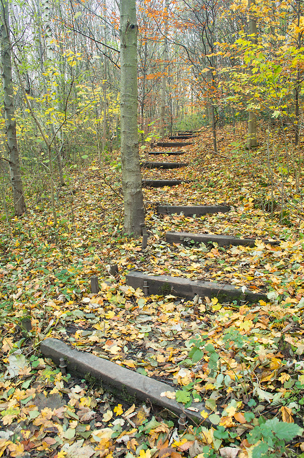 ponderosa park wood autumn steps path landscape