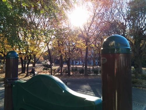 Nexus5で撮影 2013年11月29日