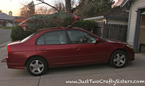 Getting our Christmas tree