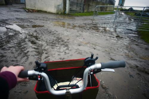 Muddy Yard